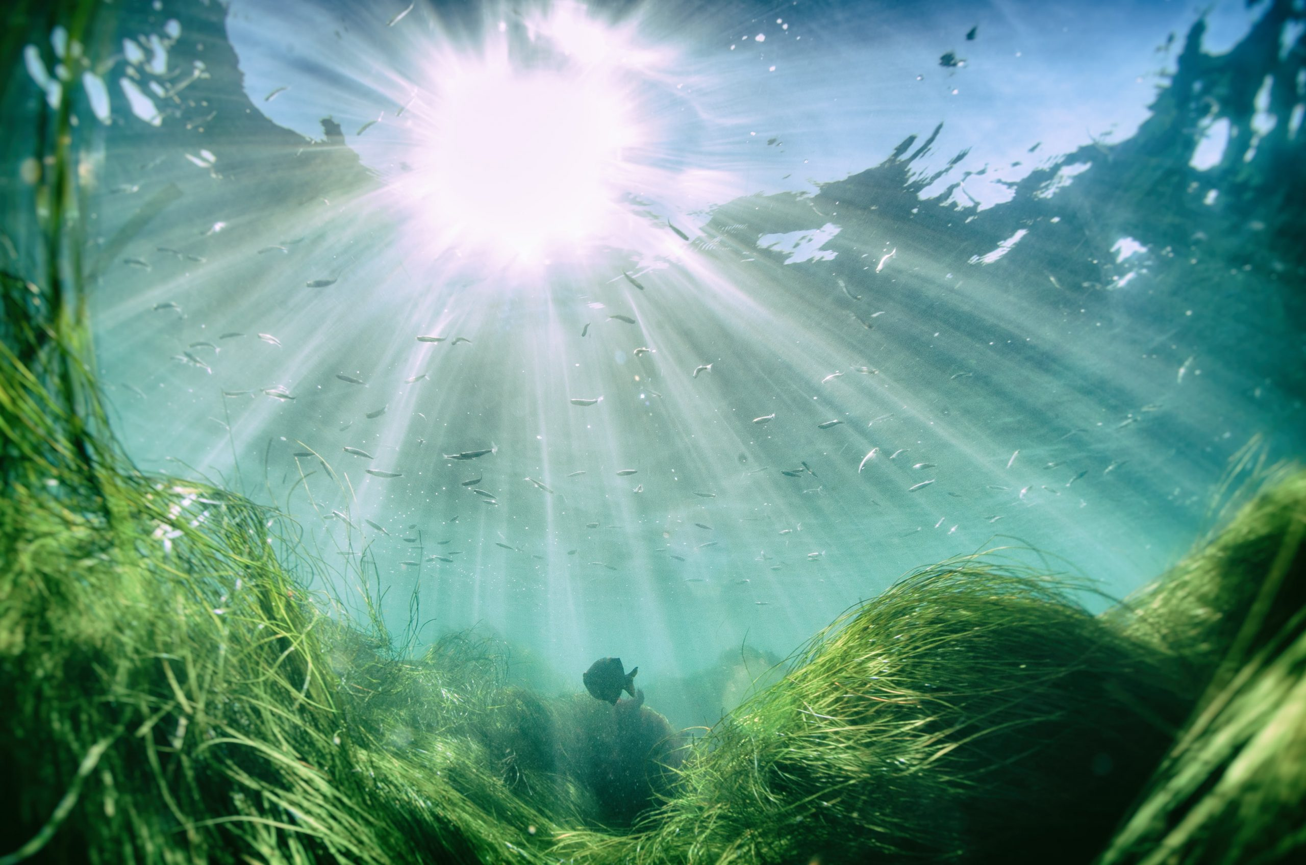Underwater scene with fish and seaweed